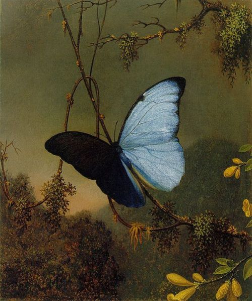 Blue Morpho Butterfly by Martin Johnson Heade (1819-1904)