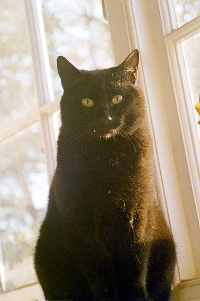 400px-Black_cat_statuesque